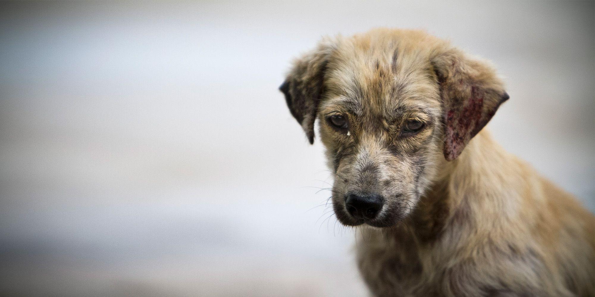 La AP de Alicante impone tres meses de cárcel por la muerte de su perro a causa de la falta de cuidados